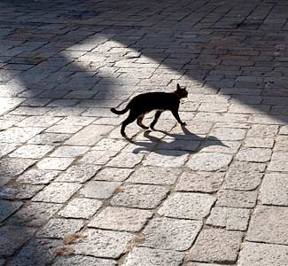 12 Famous superstitions of our Indian culture