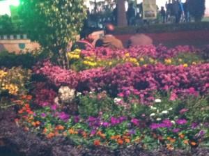 gandhi-udyan-park
