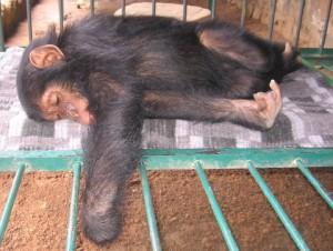 seki-still-sleeping