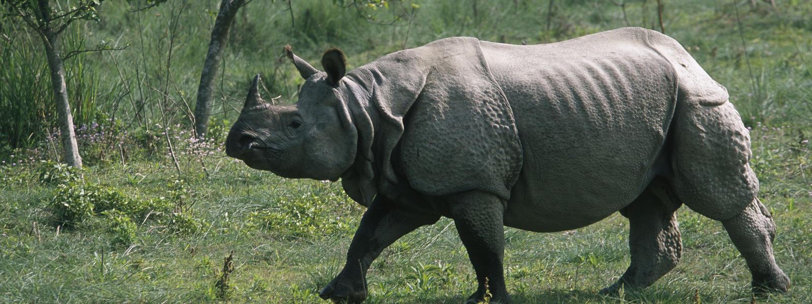 Greater_One_Horned_Rhino_8.6.2012_Hero_and_Circle_HI_107996