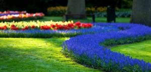 Keukenhof-garden-flowers
