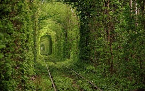 http://cdn.earthporm.com/wp-content/uploads/2014/01/Fairy-Tale-Tunnel-of-Love-Found-in-Klevan-Ukraine-5.jpg