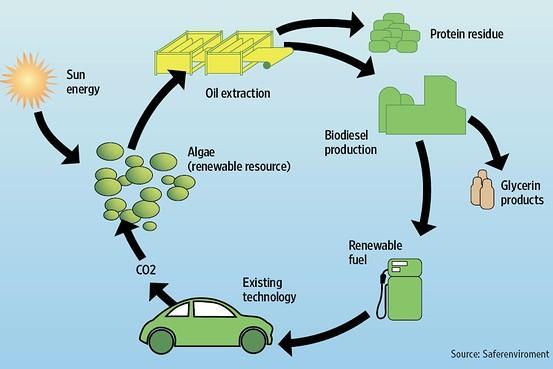 oct09-biofuels