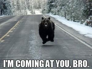 bear-running-road