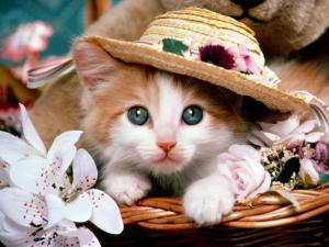 cat-pet-pics