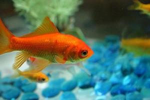 fish-low-maintenance-pets