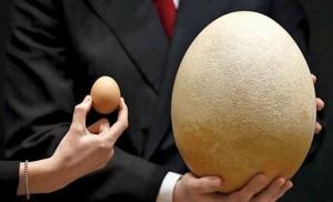 biggest-egg