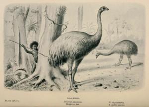 largest bird on earth