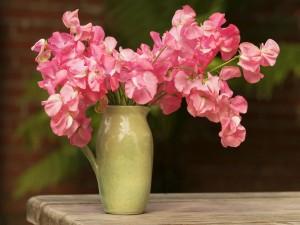 Home grown pink sweet peas in Green Vase
