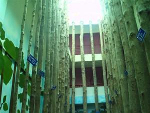 nilambur-teak-museum-3