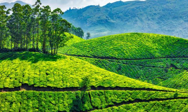 Munnar -Thekkady, Kerala